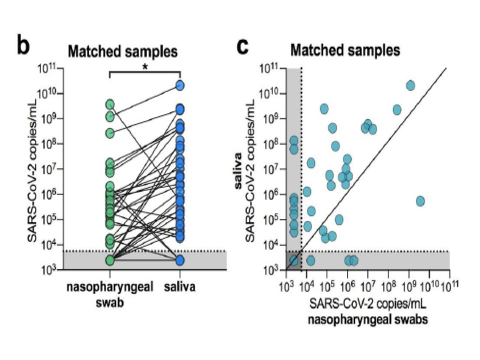 唾液と鼻咽頭ぬぐい液のウイルス量を比較したグラフ