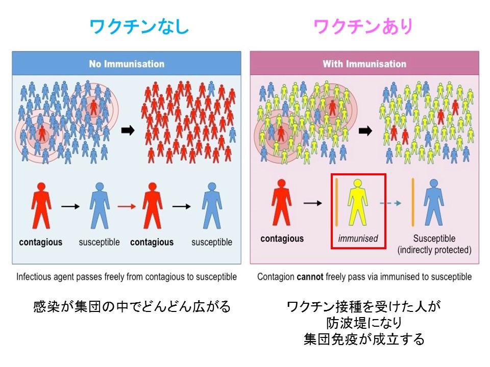 ワクチンによる集団免疫獲得の手助けを説明する図