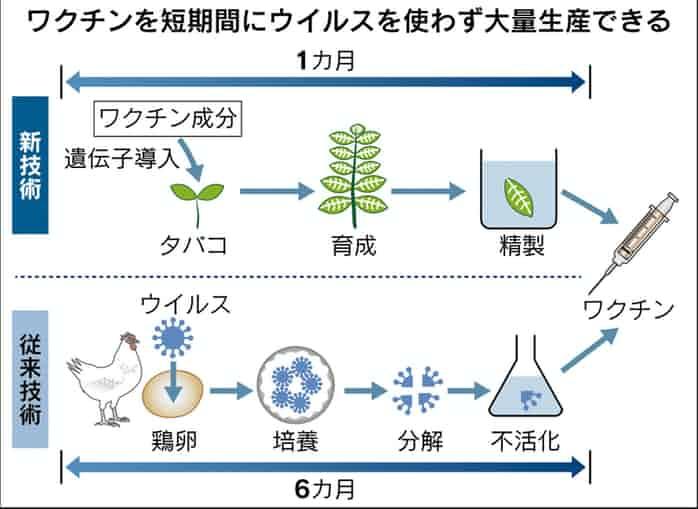 タバコの葉を用いた増殖法