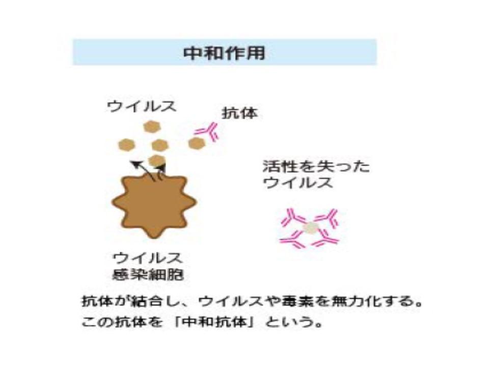 中和抗体について説明する図