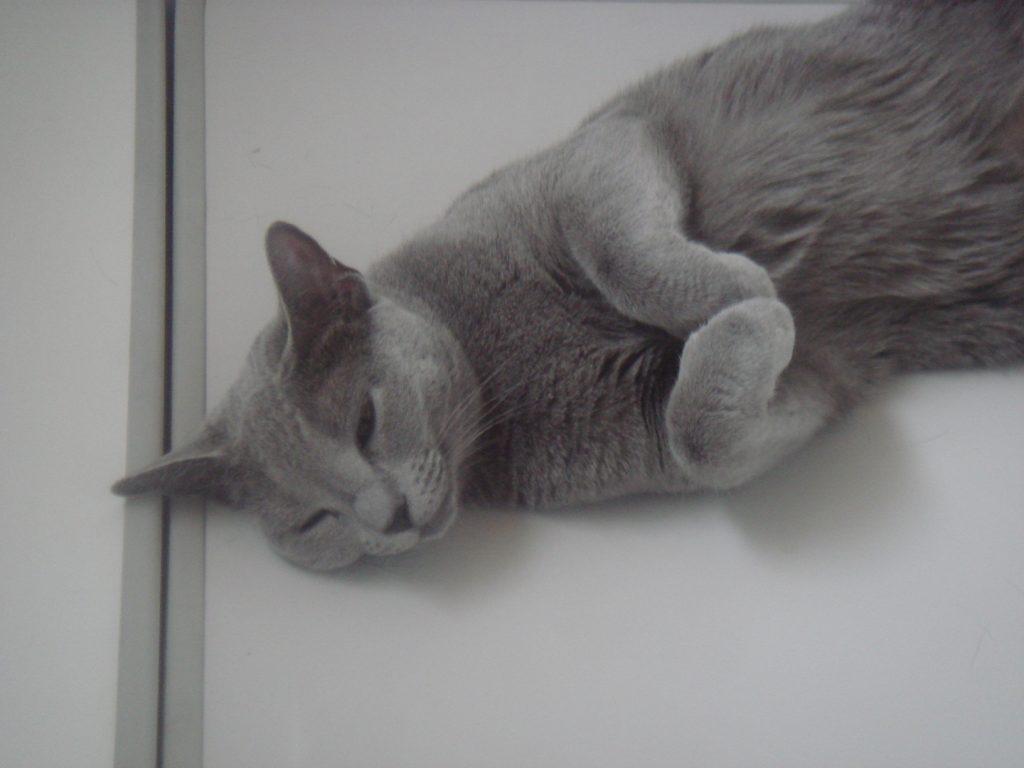 うたた寝するデイジー