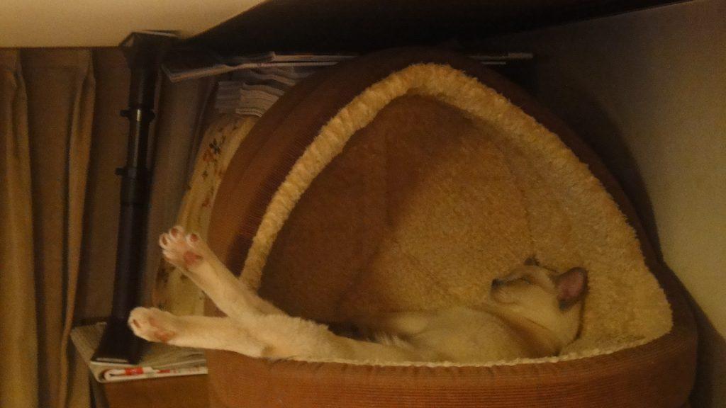 暖かいミニハウスで大胆なポーズで寝る楓