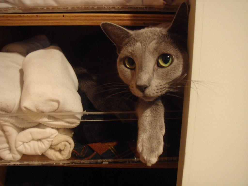 書き手の衣類棚に潜り込むデイジー