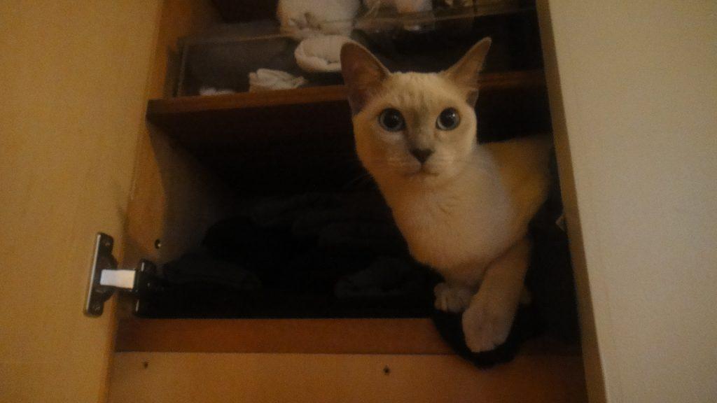 書き手の衣類棚に潜り込む楓