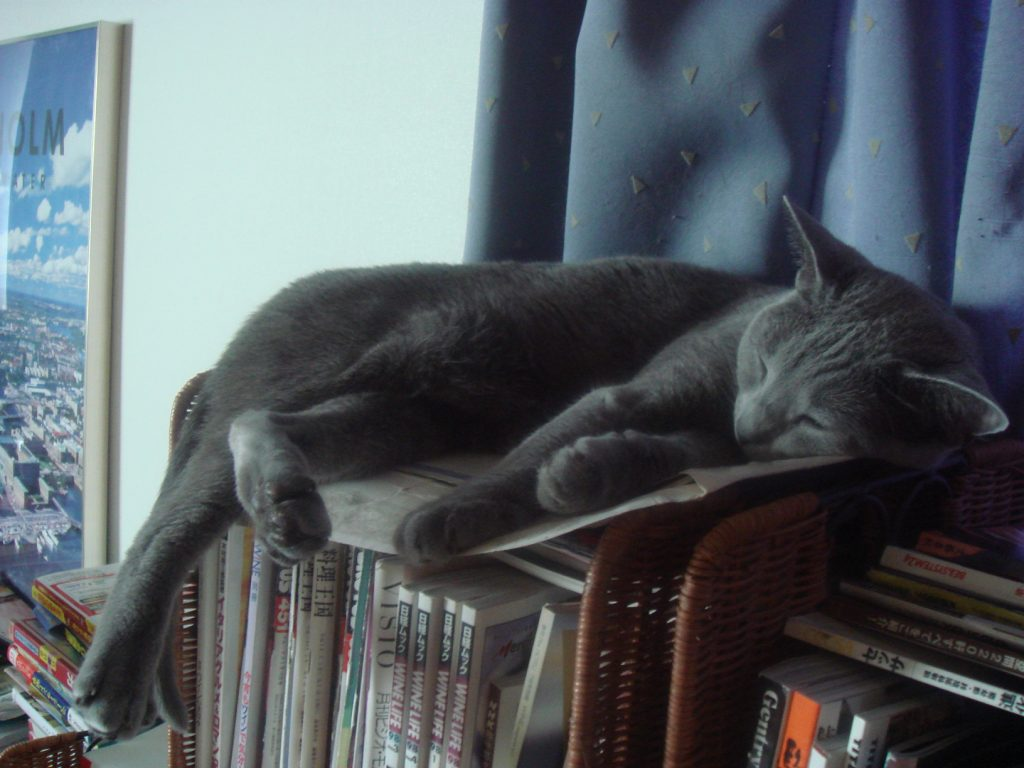 窓際の本棚の上で寝るデイジー