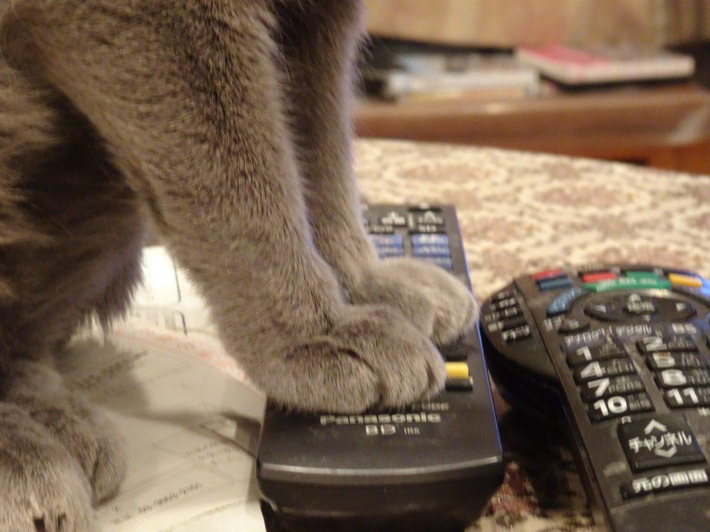 テレビのリモコンを踏んでいるデイジー