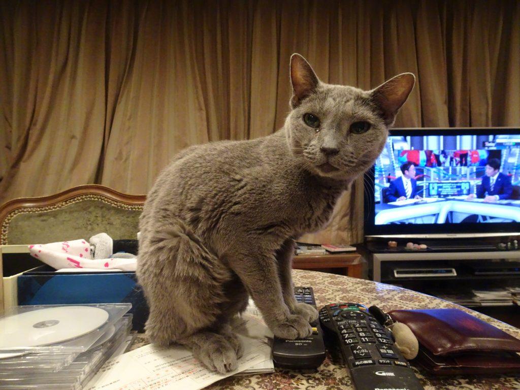 パソコン好きネコ?