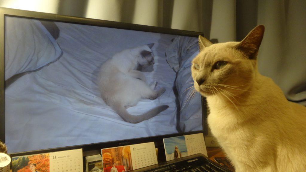 デイスプレイに写る自分の写真を見る楓