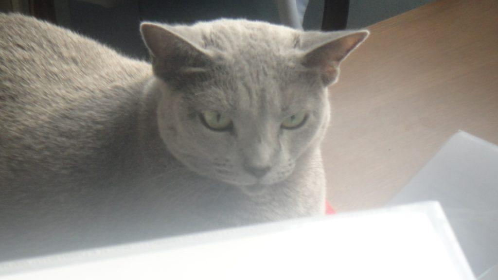 怖い表情のデイジー2