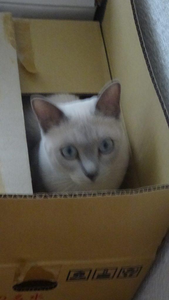 小さい箱に飛び込んだ楓