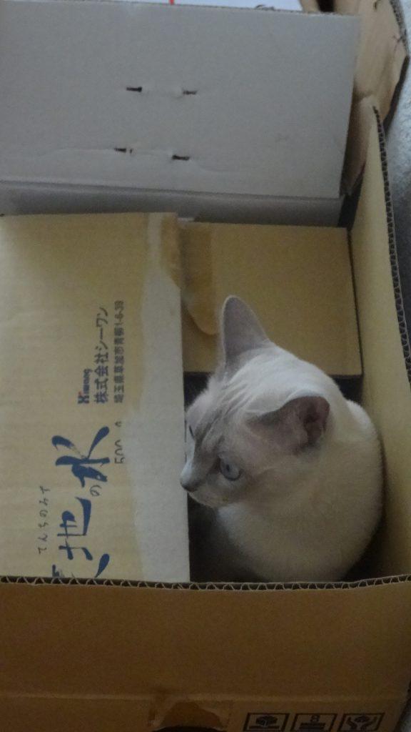 箱の中で怒る楓