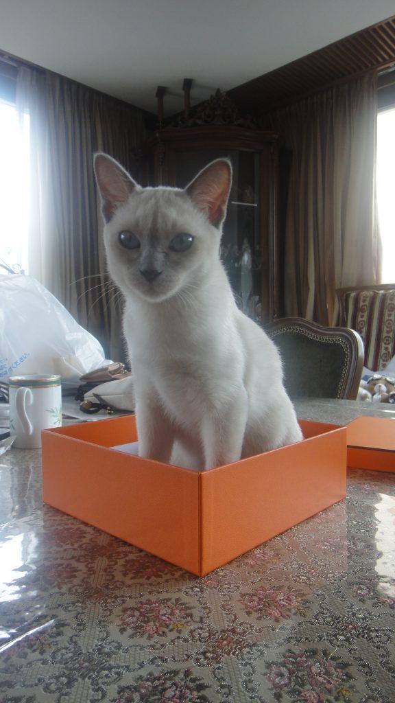 オレンジボックスに入る楓
