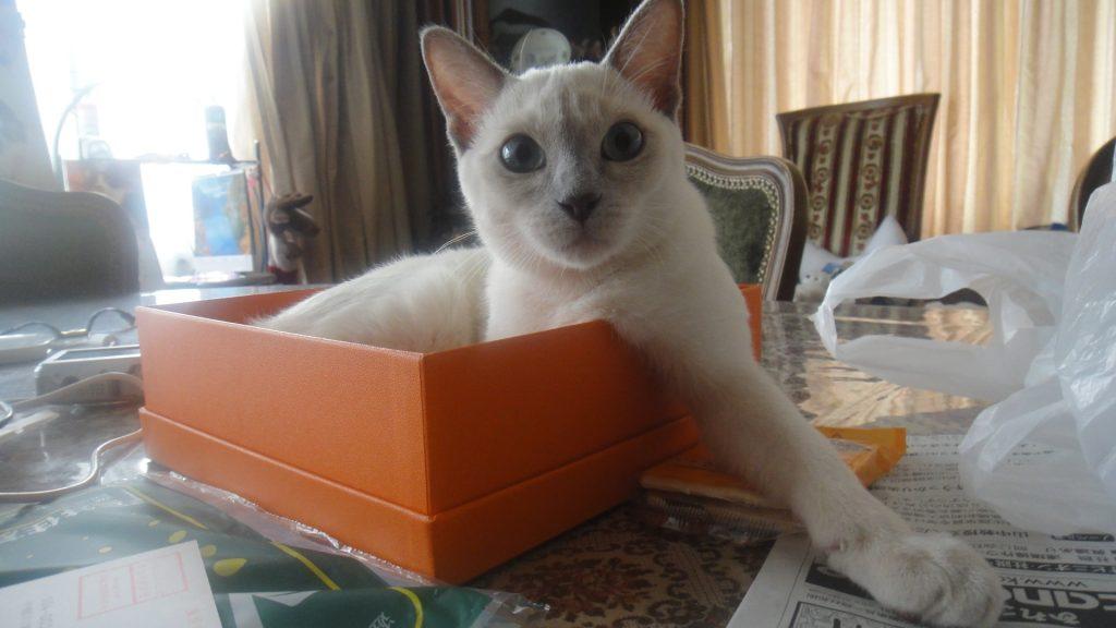 オレンジボックスでポーズをとる楓