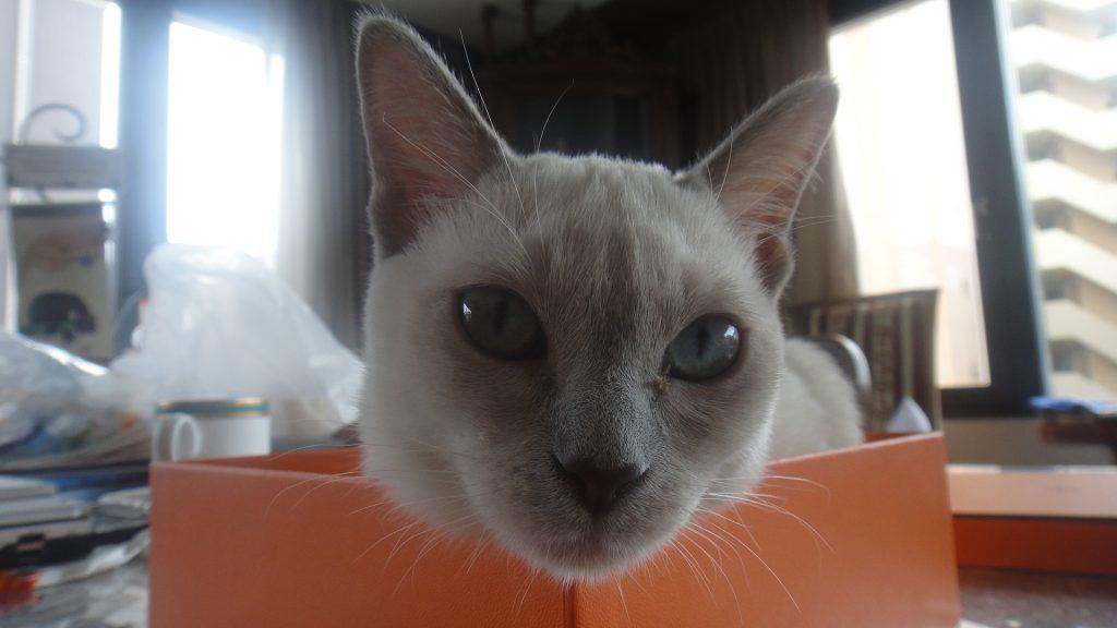 オレンジボックスでご機嫌の楓