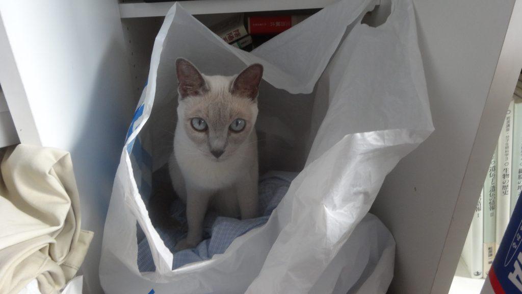 ランドリーバッグの中の洗濯物の上に座る楓