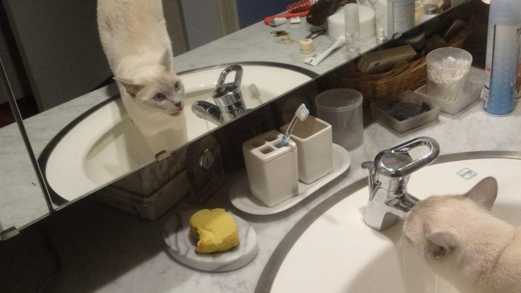 鏡にうつる自分の姿を見る楓