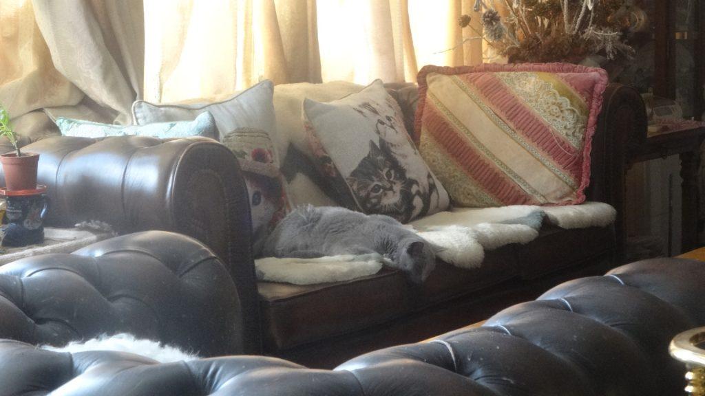 ソファで妙な格好で寝ているデイジー