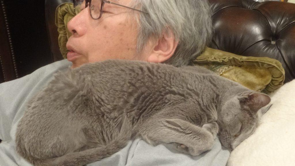 書き手の上で頭を下にして寝るデイジー