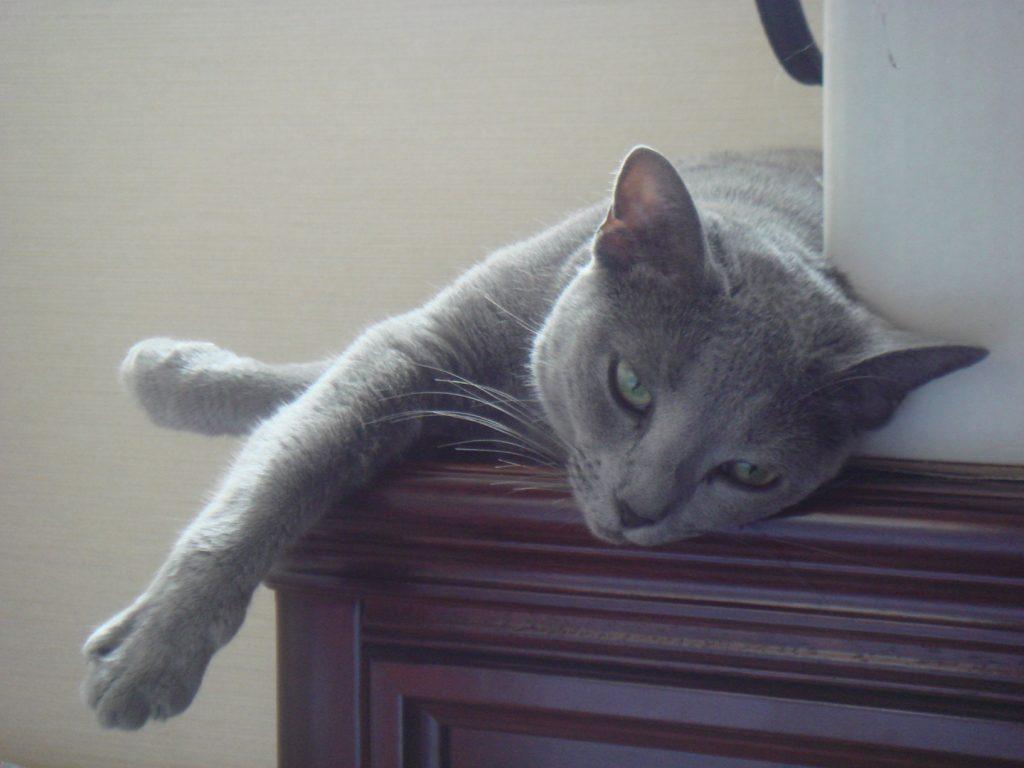 頭を下にしてのんびり寝るデイジー