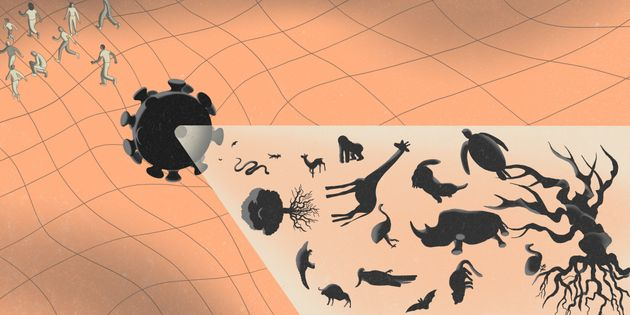 動物から人間へのウイルス感染について説明する図