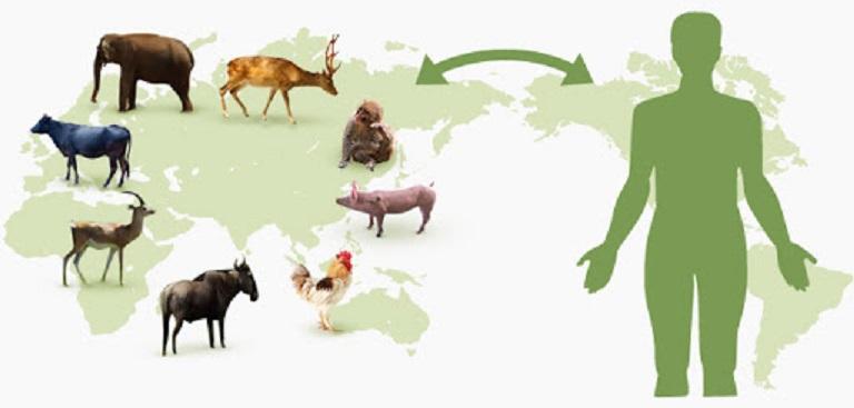 ウイルスが動物からヒトに感染する様子