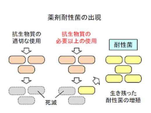 薬剤耐性菌について説明した図