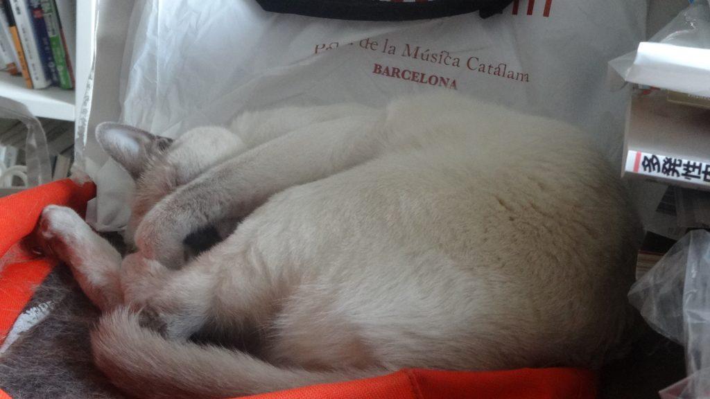 ローズのマネをして寝る楓