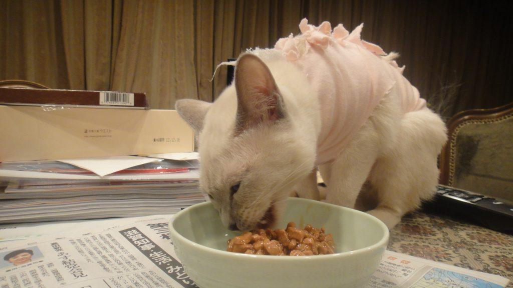 納豆を食べる楓