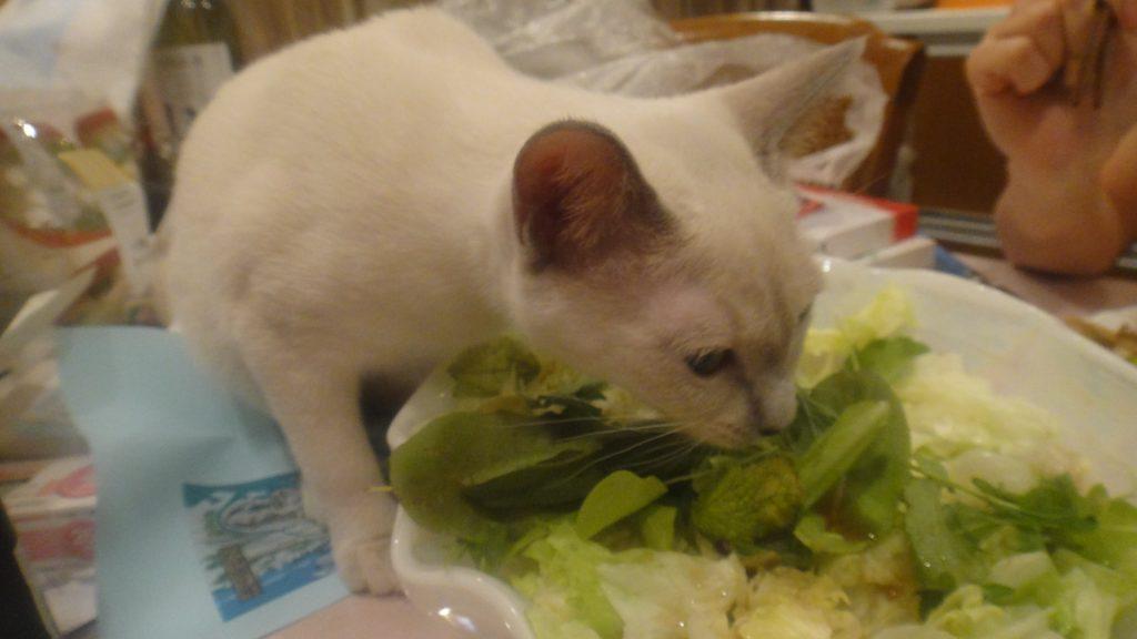 サラダを食べる楓