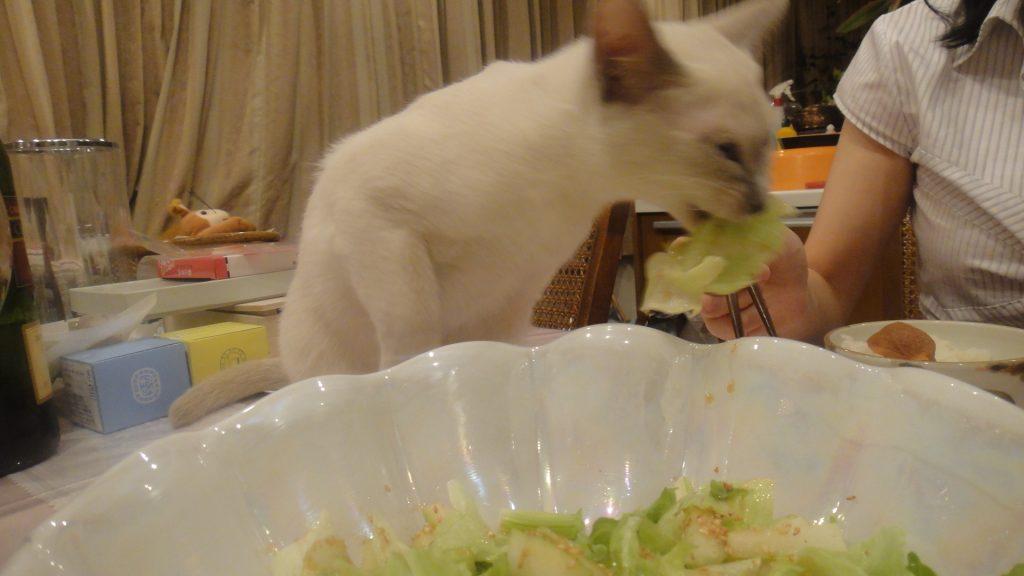 レタスを食べる楓