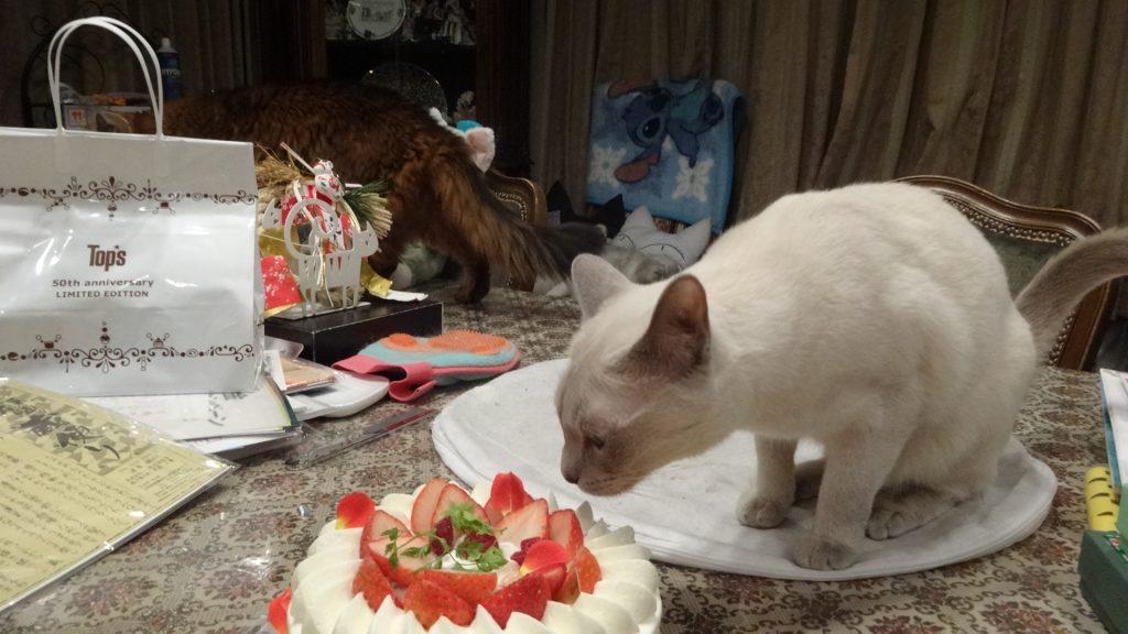 ケーキを舐める楓