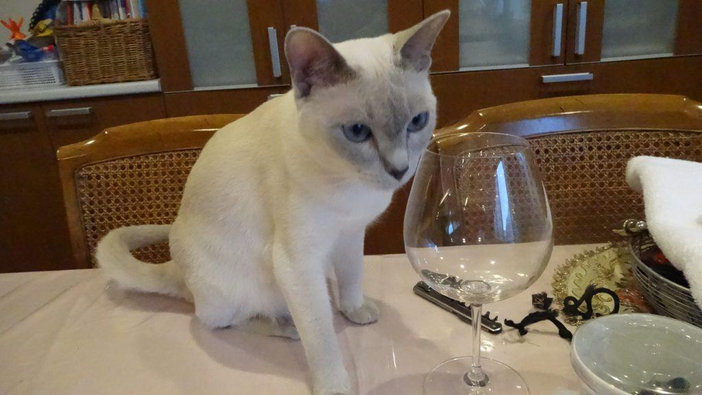 ワイングラスには興味津々の楓