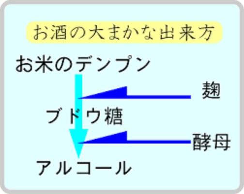麹による糖化 酵母による発酵を説明する図