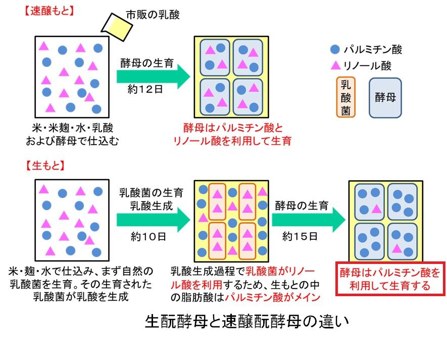 生酛造りでの酵母がパルミチン酸を主に消費することを示す図