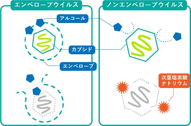 次亜塩素酸ナトリウム液によるノロウイルス消毒を示す図