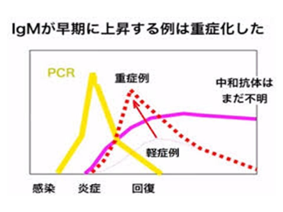 重症例では初期からIgM抗体量が多いことを示すグラフ