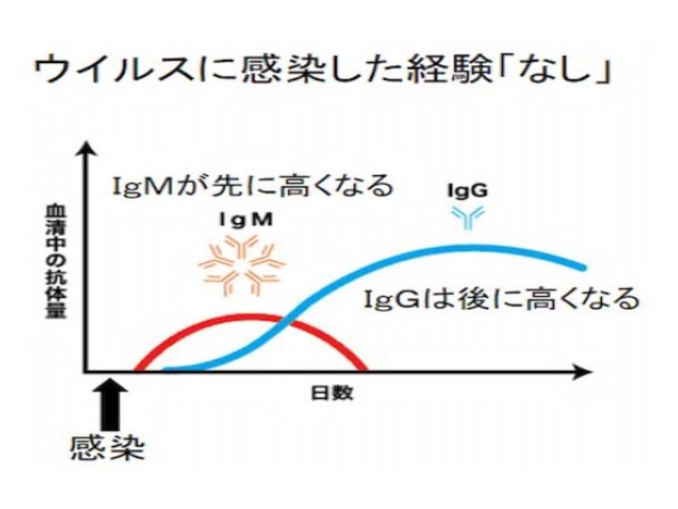 初感染では最初はIgM抗体量が多いことを示すグラフ