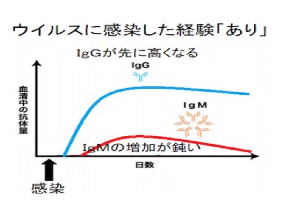 ウイルス感染経験があると最初からIgG抗体が多いことを示すグラフ