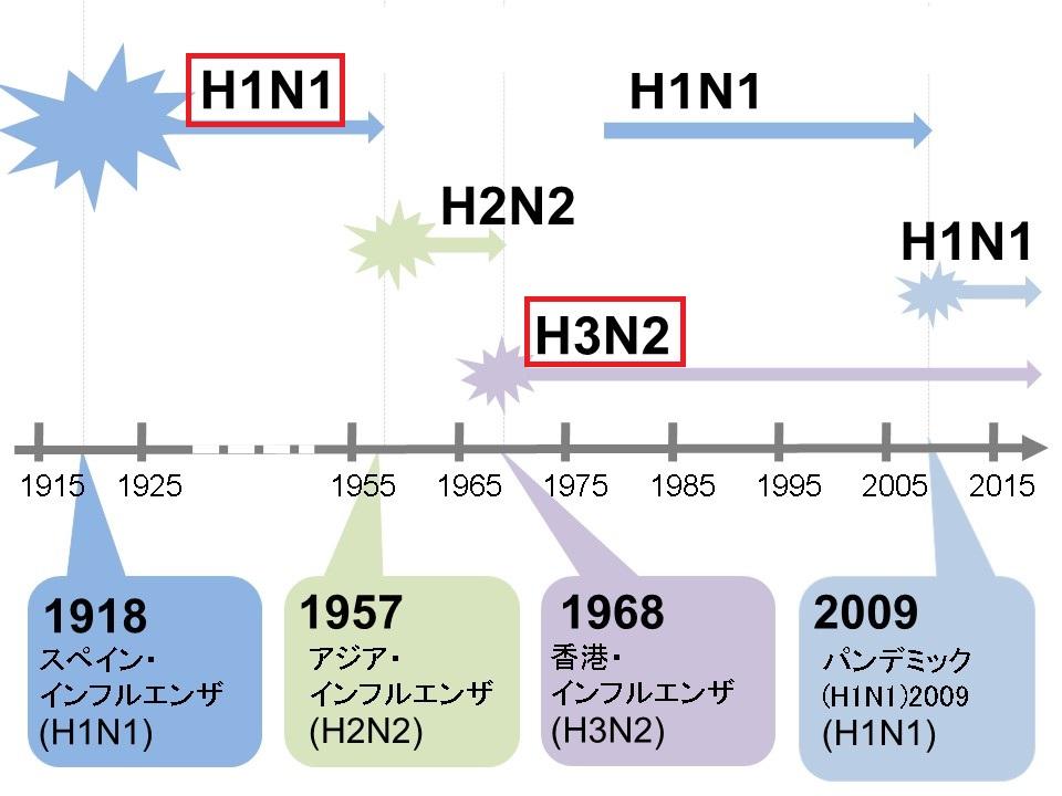 季節性インフルエンザウイルスについて説明する図