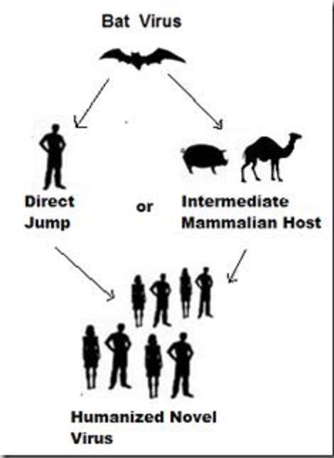 コウモリからヒトに感染するウイルスの種類を示す図
