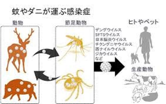 節足動物からヒトに感染するウイルスの種類を示す図