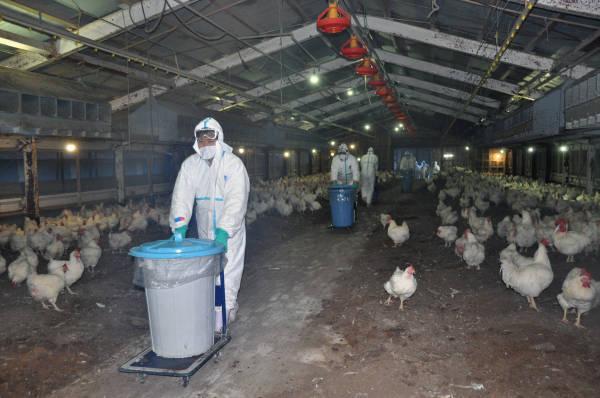 大規模養鶏場の様子