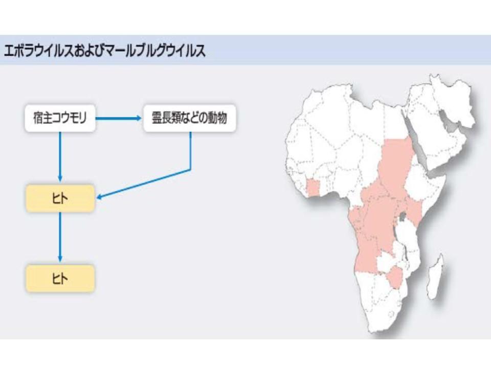 エボラ出血熱 マールブルグ出血熱の流行地域を示す地図