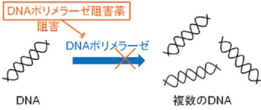 DNAポリメラーゼ阻害薬の作用機序を示す図