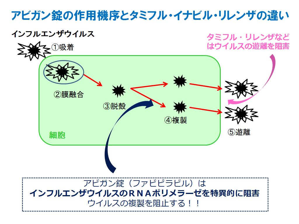 アビガンの作用機序を示す図