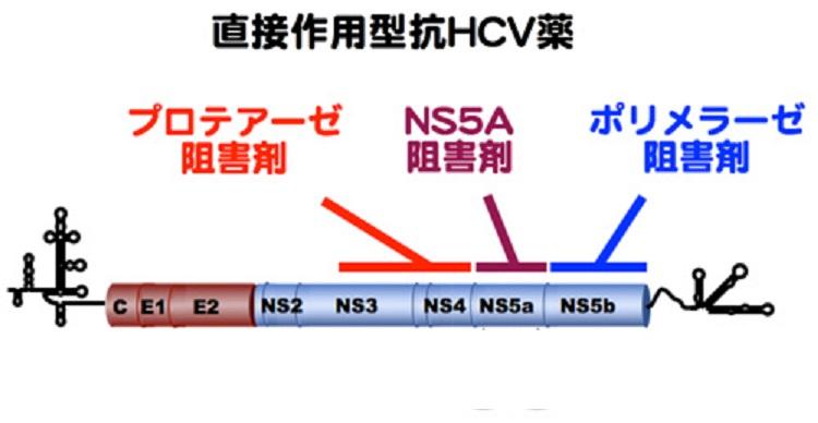 直接作用型抗ウイルス薬(DAA)の作用機序を示す図