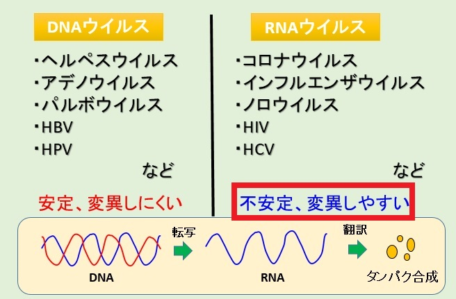 RNAウイルスはよく突然変異を起こすことを示す表