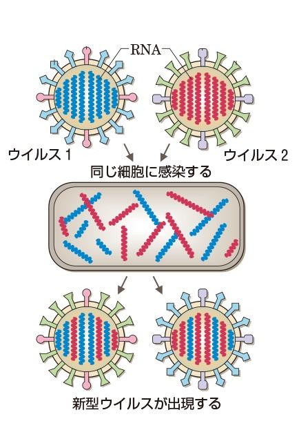 分節化RNAの交換を示す図