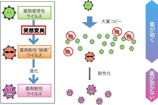 突然変異を起こして薬剤耐性になる過程を説明する図
