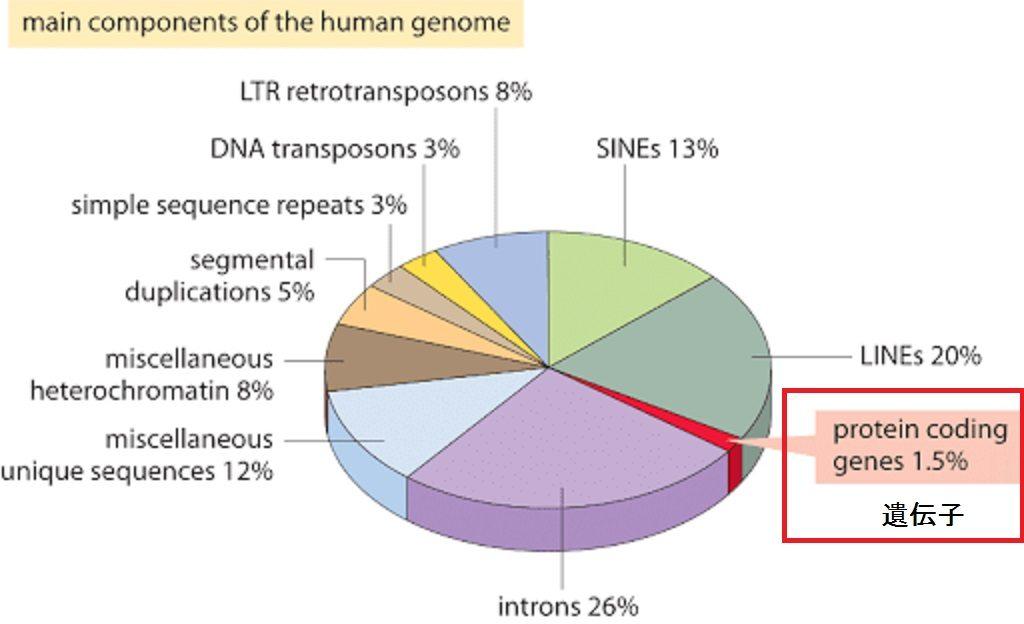 機能が明らかな遺伝子は1.5%しかないことを示す円グラフ